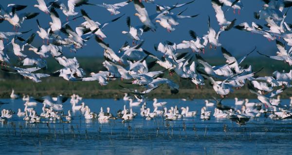 Hokersar wetland kashmir
