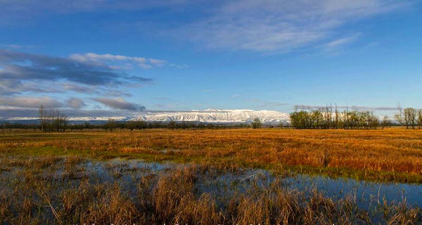 Shallabugh wetland